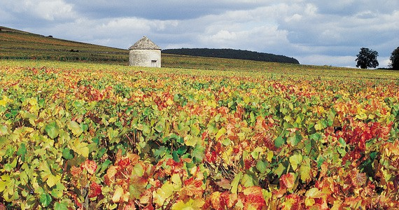 Beaune Wine Holiday - Credits Cote-d'Or Tourisme J-M. Schwartz