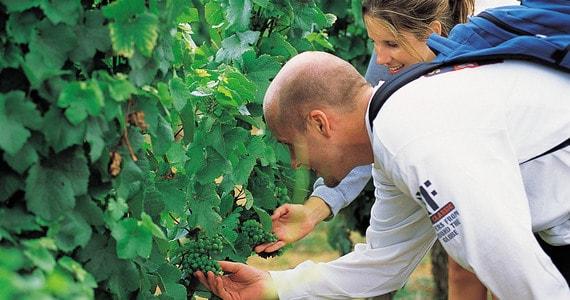 Beaune Wine Holiday - Credits Cote-d'Or Tourisme R Krebel Vineyards
