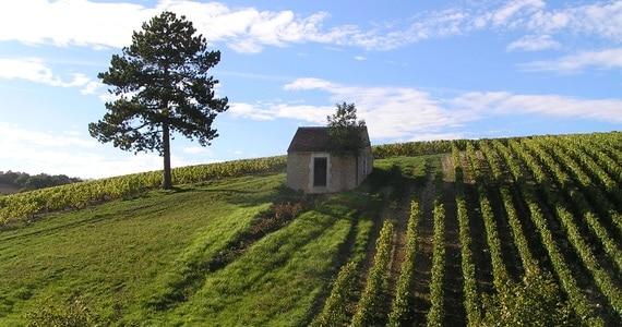 Burgundy wine tours - credits cabane Préhy