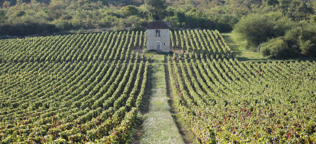Burgundy area - credits Givry Cote Chalonnaise Bourgogne