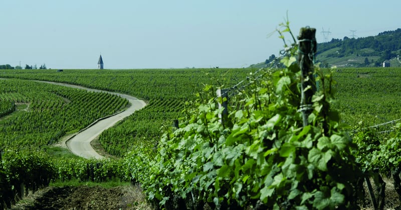 Dijon wine holiday - Credits Office de Tourisme de Dijon - Atelier Démoulin