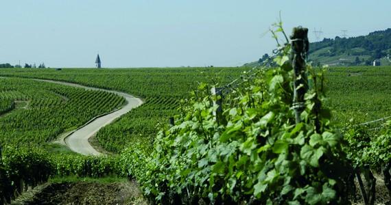 Beaune wine tour- Credits Office de Tourisme de Dijon - Atelier Démoulin