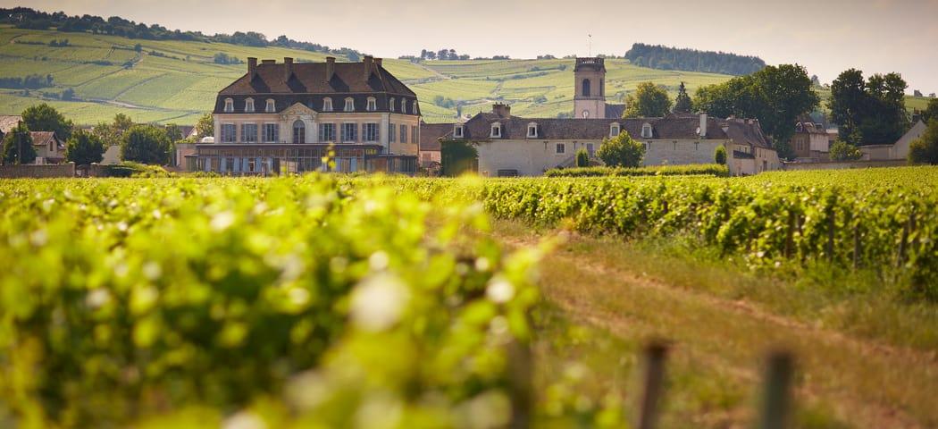 Burgundy Wine Tours - Beaune Tourisme © Château de Pommard (2)