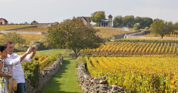 Dijon wine tour © Muzard