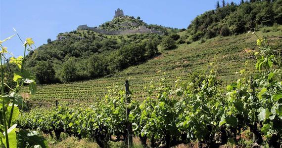 Rhone wine tours - vignes sous crussol