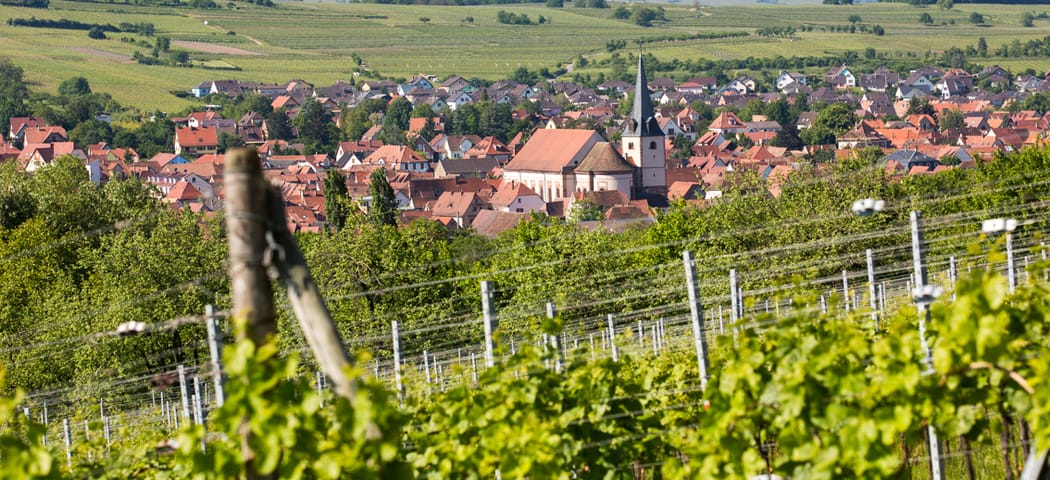 Alsace Wine Tours- Credits Meyer and ADT Alsace