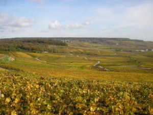 Wine tours in Champagne