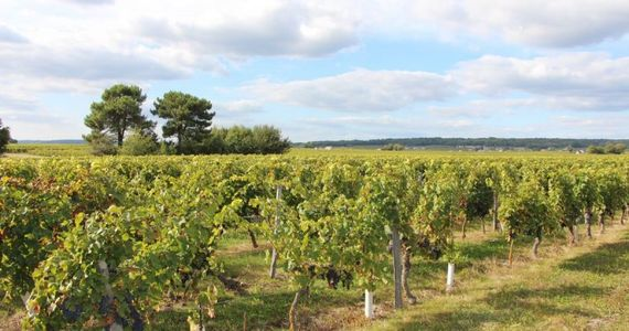 Loire wine tours - credits Nantes Wine Tours