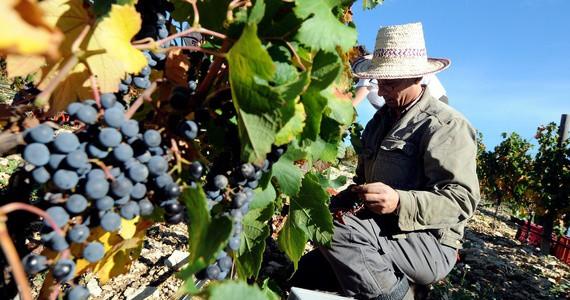 Provence Wine Tour - Credits Sophie Spiteri