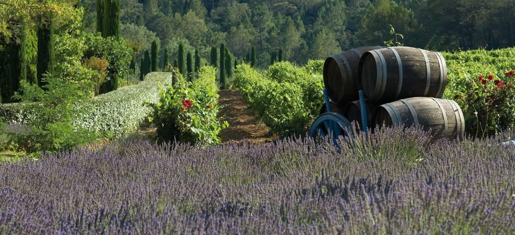 Team Building Wine Tasting - Credits Chateau de Berne