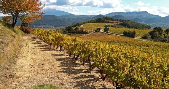 Rhone wine tour - Copyright Cave de Rasteau