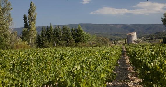 Rhone wine tour - Credits Eurostar