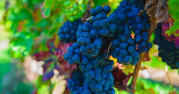Loire wines - Credits Chateau du Petit Thouars