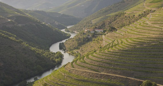 Porto wine tour - credits Grapes Hospitality - The Fladgate Partnership