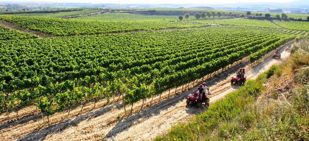 Rioja area - credits Bodegas Bilbainas
