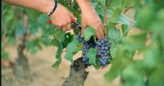 Chablis Wine Tour