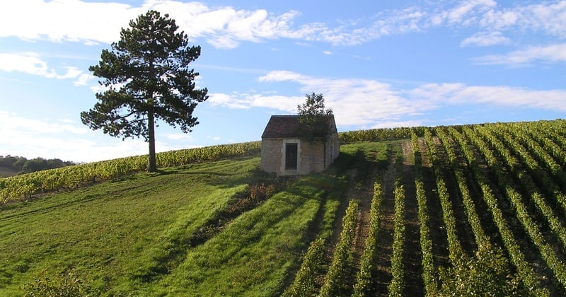 Chablis wine tour - Credits Vititours Chablis