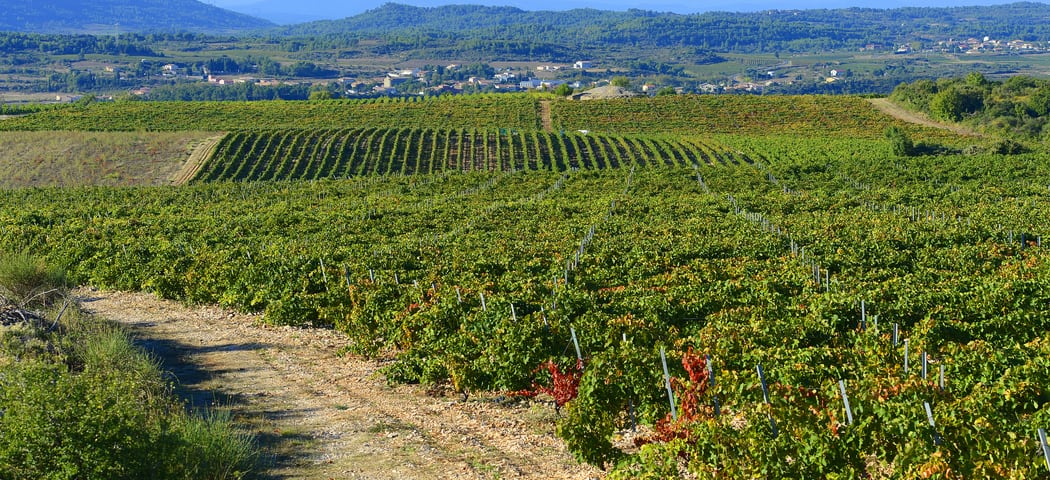 Languedoc wine tours - Credits Chateau Canet