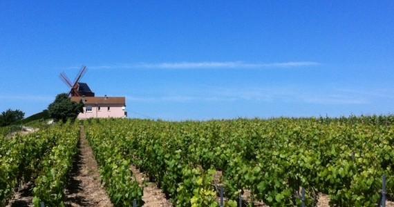 Champagne harvest tours