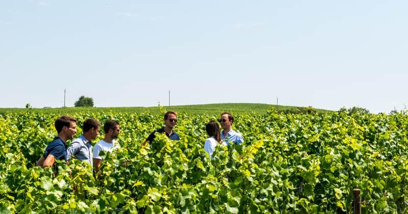 Epernay vineyard tour - Credits Vine Escape