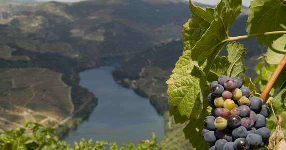 Port tasting - Credits Douro Wine Tourism