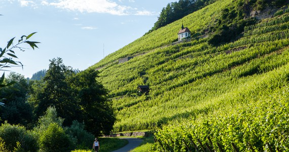 Alsace wine tours - Credits Meyer and ADT Alsace