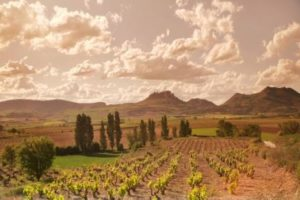 Rioja vineyards
