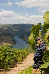 Douro Agosto Verao- Credits Douro Wine Tourism