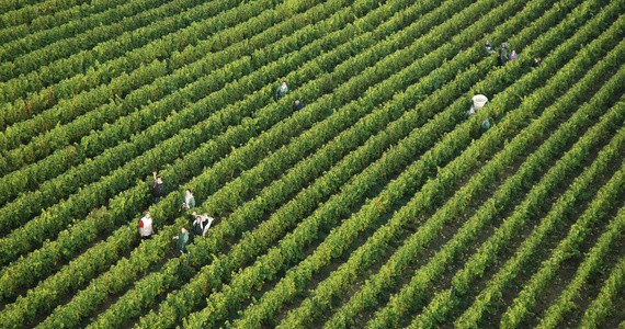 Saumur Wine Tour - Credits Vendanges BRoumet BIVC