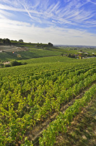 St Emilion Vineyards- Credits Heurisko
