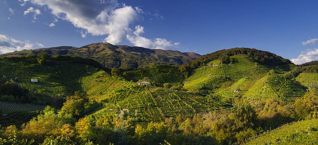 Prosecco area - Credits Ottobre 2008 Locanda la Candola