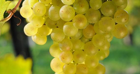 Prosecco wine tours - Credits Locanda Candola