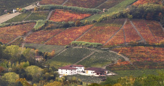 Piedmont area credits Azienda Agricola Luigi Drocco