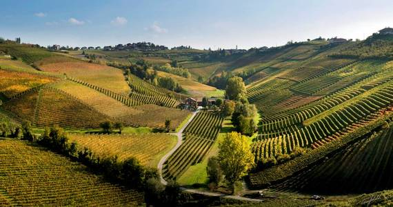 Piedmont wines - credits Ca del Baio