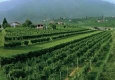 Villa Sandi Vineyard- website