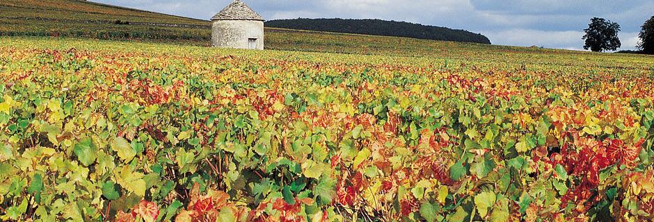 Beaune Wine Tours- Credits Côte-d'Or Tourisme © J-M. SCHWARTZ
