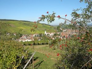 Alsace Barr Wine Road © C. Fleith 056