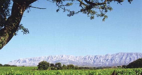 Provence wine tour Copyright Mas de Cadenet