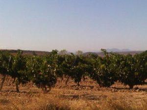 Rioja wine holiday