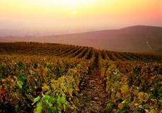 Champagne House accommodation champagne-vineyards-jk-graeber-newsletter
