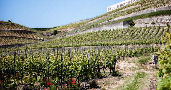 Rhone Valley Tour - Credits Julie Rey Hermitage