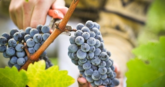 Bordeaux winery tour credits Pape Clement