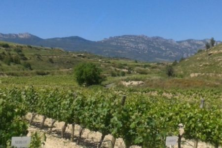 Rioja Wine Tours - Credits Widescreen