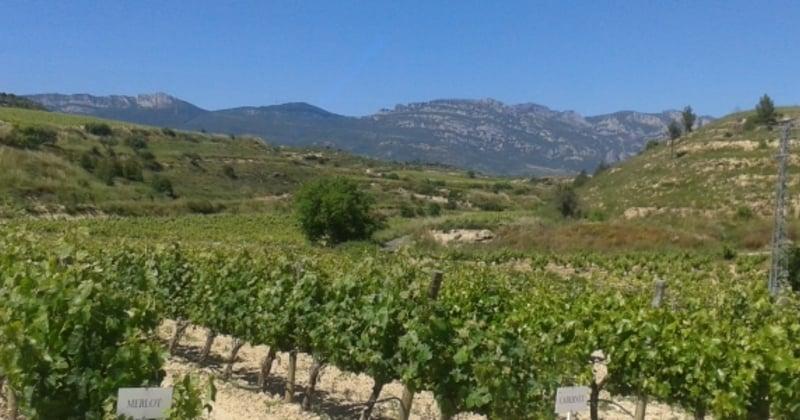 Rioja Wine Tours - Credits Widescreen