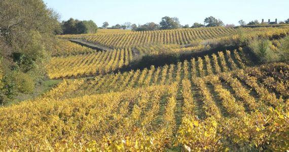 Loire wine tour-