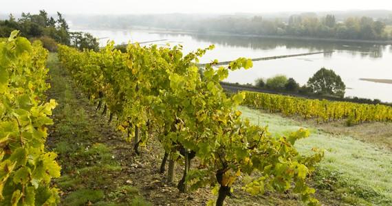 Loire Wine Tour - Credits Stevens Fremont