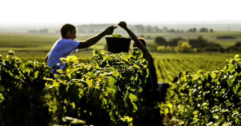 Champagne Harvest Tours-®www.mkb.photos-Coll. ADT Marne2