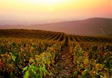 Veuve Clicquot tour Champagne Vineyards ©JK.Graeber Newsletter