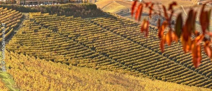 Wine and Truffle tour - 0362_MRZ9347 copia_il boscareto_ph-®lefotodimarzo