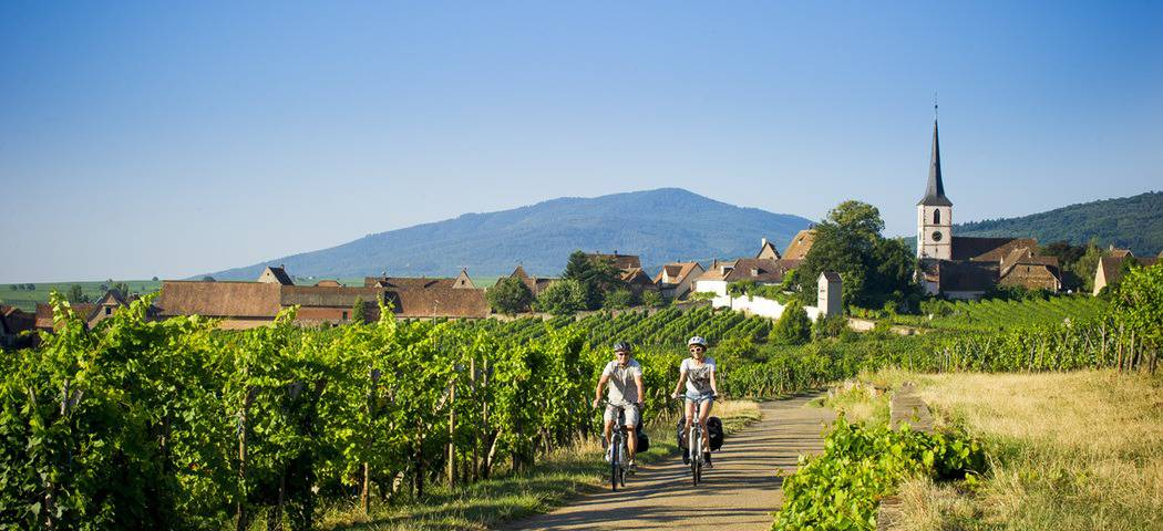 Cycling in the Alsace Vineyards- Credits Infra and ADT Alsace
